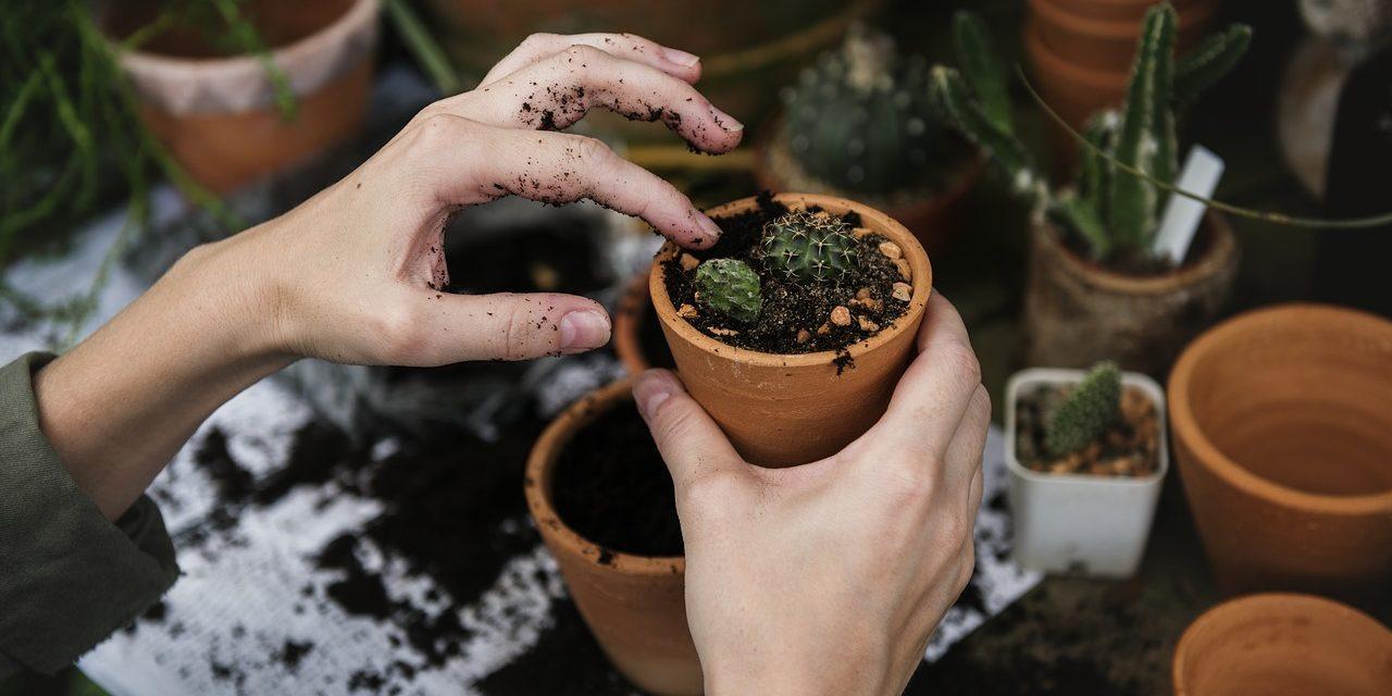 Come pensare e progettare i piccoli giardini