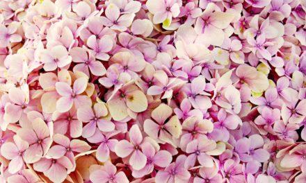 Stampe floreali e come farle